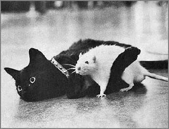 cat and rat hug