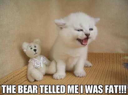 the bear told me i was fat