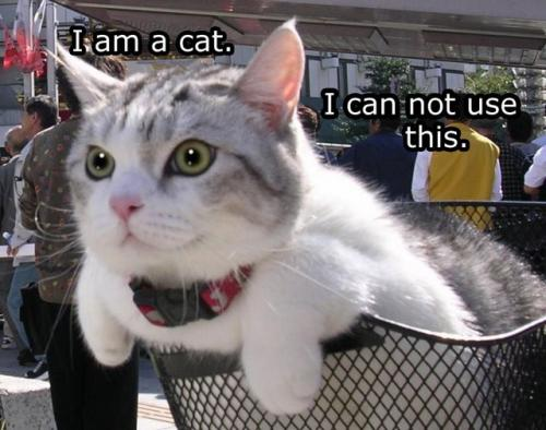 i am a cat i can not use this