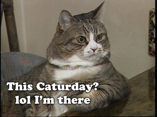 this caturday? lol i'm there