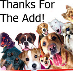 thanks for the add dogs