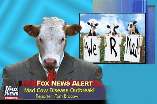 cows on the news - mad cow disease outbreak