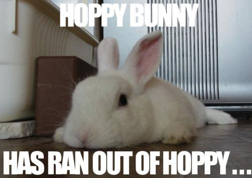 hoppy bunny has ran out of hoppy