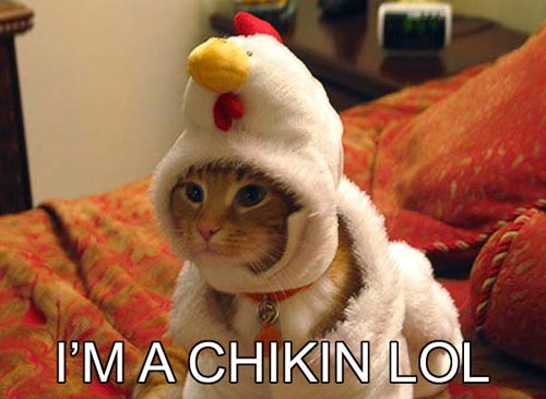 Cat I'm a chicken LOL