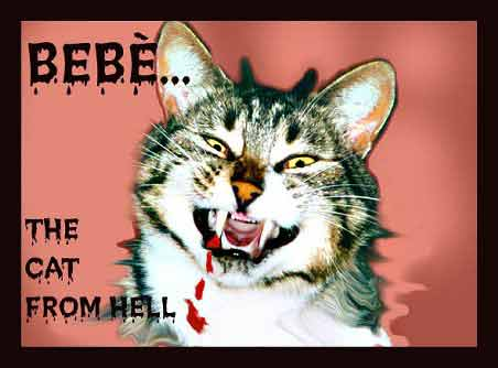 bebe the cat from hell