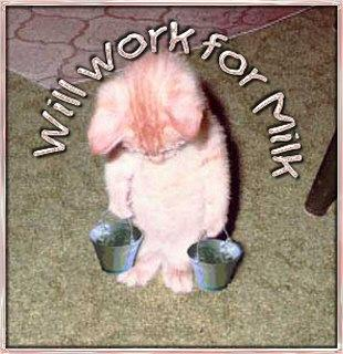 kitten will work for milk