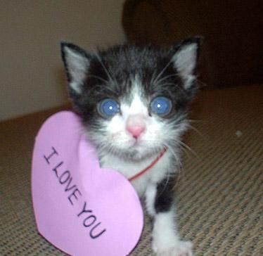 i love you kitten