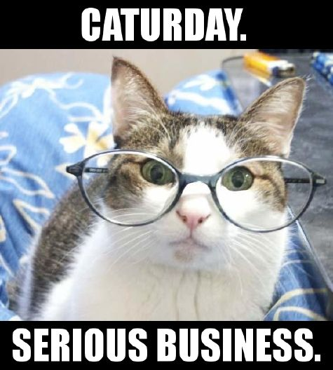 caturday serious business saturday