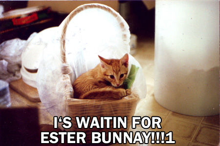 i'm waiting for the easty bunny