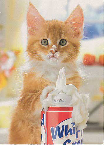 whip cream kitten