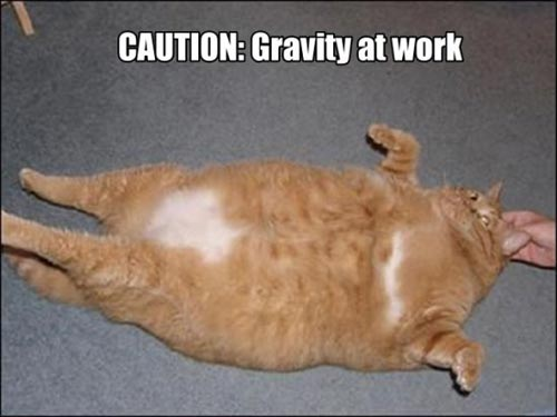 caution gravity at work fat cat