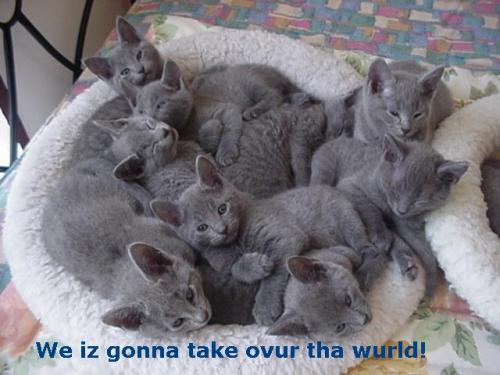 we are going to take over the world
