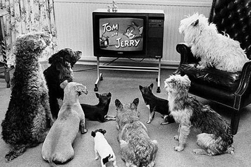 dogs watching tom and jerry