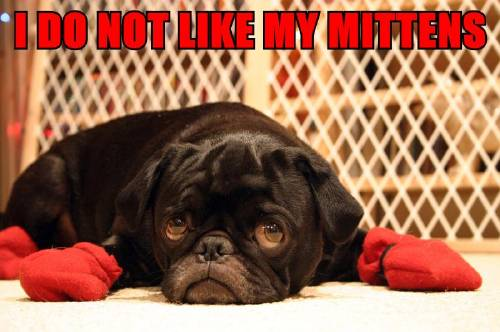 i do not like my mittens