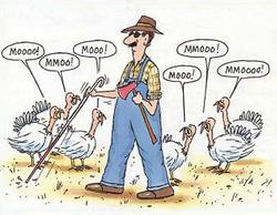 turkeys sound like cows for blind man on thanksgiving