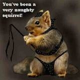 you've been a very naughty squirrel icon