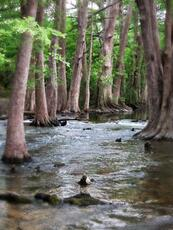 trees water