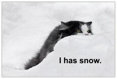 i have snow