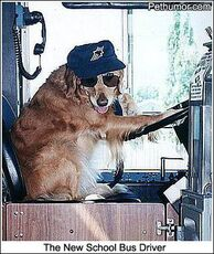 the new school bus driver