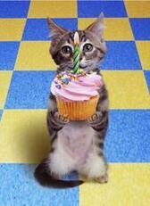 happy birthday cat cupcake