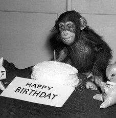 happy birthday monkey