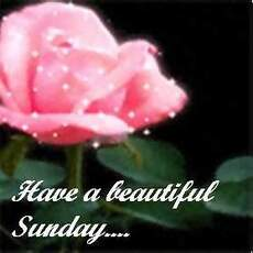 have a beautiful sunday - flower