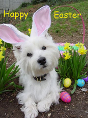 happy easter dog