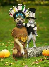 native american dog pilgrin cat